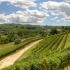 Dematerializzazione registri vinicoli.